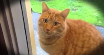 Adorable Kitten Rings Doorbell To Be Let In