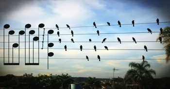 Creative Musician Sees Birds On A Wire And Creates Beautiful Tune