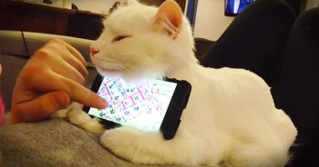 Precious Kitty Acts As The Most Adorable Phone Holder