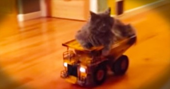Adorable Kitty Rides Around On Remote-Controlled Truck