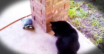 Cat And Turtle Play The CUTEST Game Of Tag
