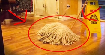 Ordinary Looking Mop Holds Furry Surprise