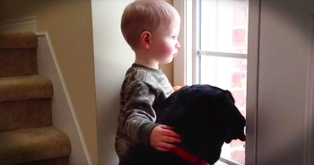Toddler Comforts Dog Who Misses Family