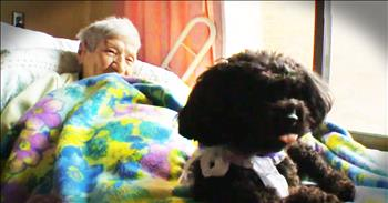 Abandoned Dog Is Doing God's Work In This Nursing Home