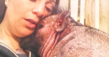Woman Sings 'Down In The Valley' To Pig In Hospital