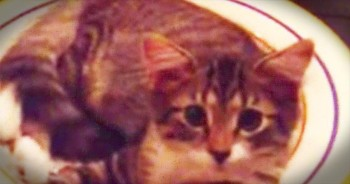 Kitty Adorably Responds To Mom's Question