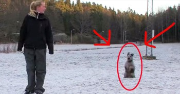 Incredible Dancing Dog Will Dazzle You