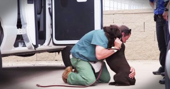 Abused Dog Gets Second Chance In Prison