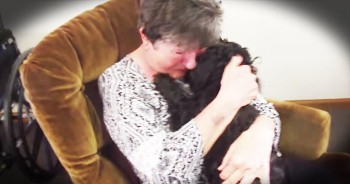 Lost Pup Has Emotional Reunion With His Human