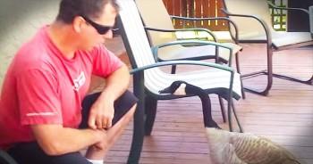 Funny Man 'Talks' To Goose