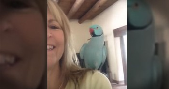 Cute Talking Parrot Will Give You The Biggest Smile
