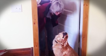 Dog Hilariously Rejects Her Human's Kisses
