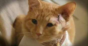 Hero Cat Takes A Bullet For 3-Year-Old Little Boy