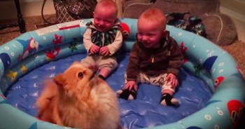 Adorable Twins And Pomeranian Will Have You ROLLING!