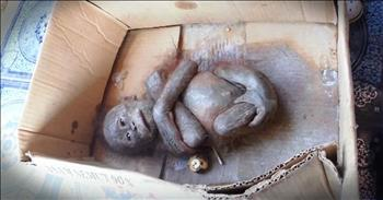 Baby Orangutan Found In A Box Was Rescued from The Brink Of Death