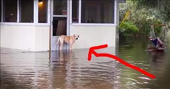 Good Samaritan Saves Dog Stranded In Flood Water