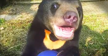 Orphaned Bear Cub Sees A Playground For The First Time