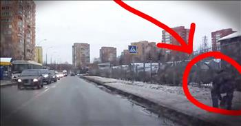 Good Samaritan Stops Traffic To Help Dog Cross Road