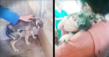 Abused Dog Cries As She Discovers What Love Is