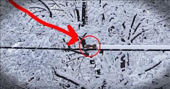 Squirrel Is Hilarious And Tiny Snow Plow