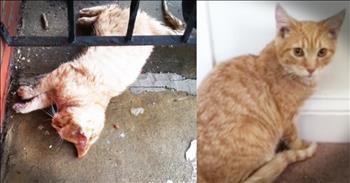 Good Samaritan Helps Stray Cat Frozen To Porch