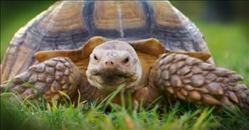 Woman's Search For Tortoise Walker Is Sweet And Hilarious!