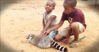 Friendly Lemur Just Wants More Scratches