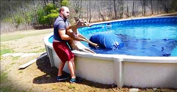 Amazing Deer Rescue From Family Pool