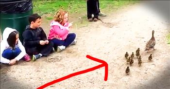 School Children Guide Momma And Her Ducklings To Pond