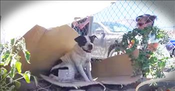 Homeless Dog Mandi Gets Amazing Rescue From Good Samaritans