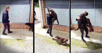 Police Officer Has Heartwarming Reunion With K9s