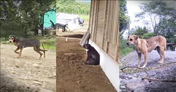 Tropical Vacation Turns Into Dramatic Dog Rescues