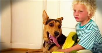 Rescue Dog Changes The Life Of A Struggling Little Boy