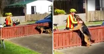 Mailman's Daily Dog Break Will Make You Smile