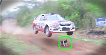 Dog Miraculously Survives Stepping In Front Of A Rally Car