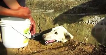 Dog With His Head Stuck In A Wall Gets Rescue