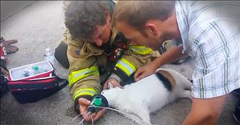 Firefighters Rescue Family Cat From Burning Building