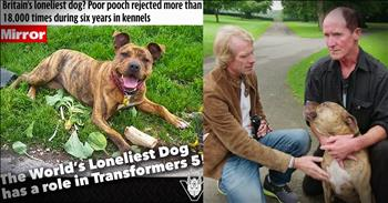 The Loneliest Dog In Britain Gets A Home And Starring Movie Role