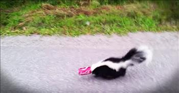 Man Bravely Rescues A Skunk With Can Stuck On Head