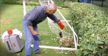 Feisty Fox Stuck In A Net Gets Amazing Rescue
