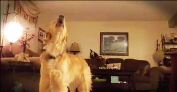 Opera-Singing Golden Retriever Sings 'The Prayer'