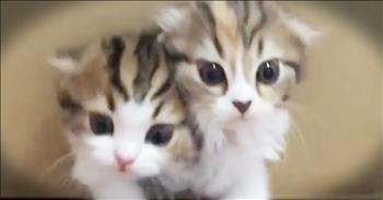 Adorable Kittens Keep Climbing Out Of A Box