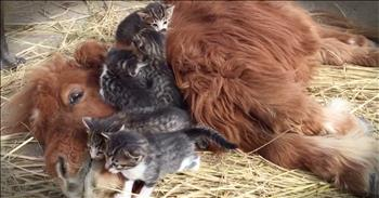 Unusual Animals Have The Most Adorable Snuggle Time