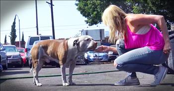Gentle Giant Dog Gets Beautiful And Easy Rescue