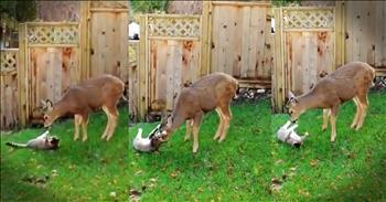 Deer And A Cat Spark An Adorable Friendship
