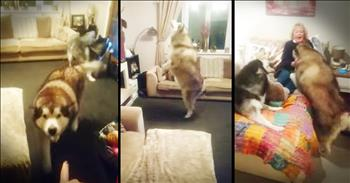 Dogs Have Cute Reaction To Grandma In The House