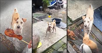 Mother Dog Begs For Food For Puppies