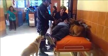 Dogs Refuse To Leave Injured Owner's Side