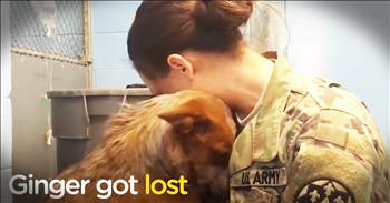 Lost Dog Reunites With Her Momma After Weeks In A Shelter