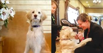 Funeral Home Expands Their Staff By Hiring A Dog
